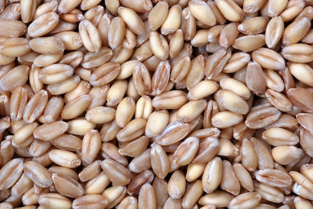 What are Wheat Berries?