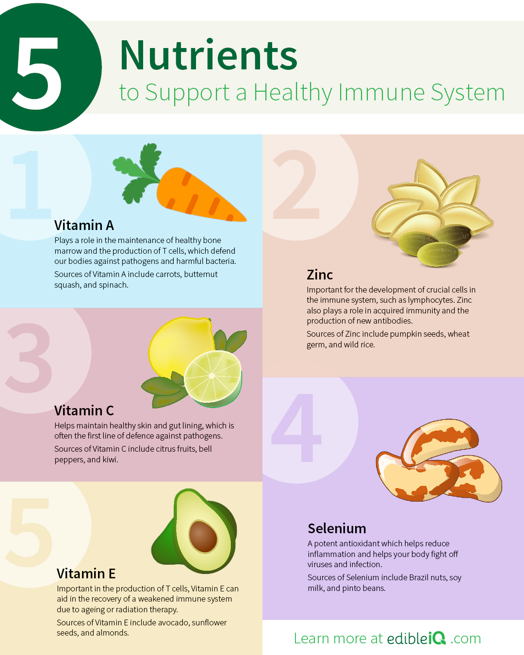 5 Nutrients to Support a Healthy Immune System